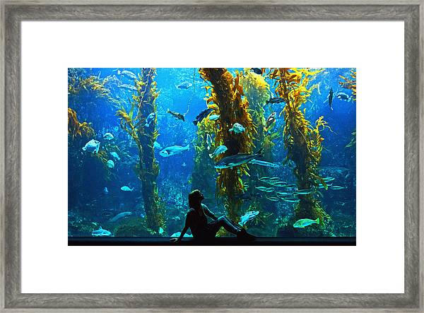 Dream Big  Framed Print by Donna Pagakis