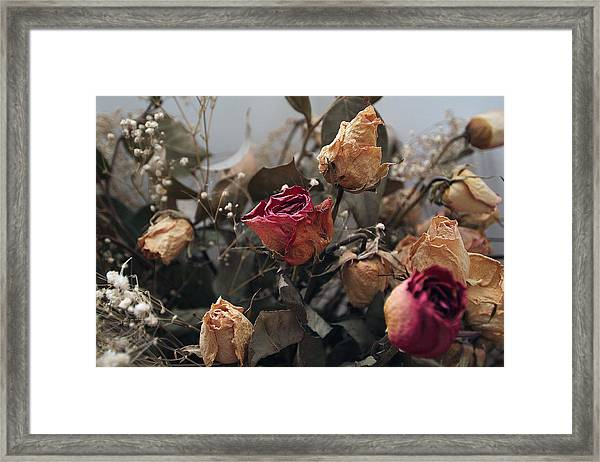 Dried Roses Framed Print