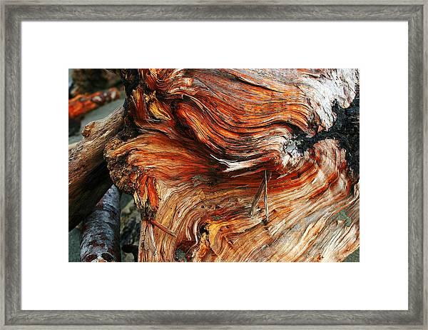 Drift Redwood Framed Print