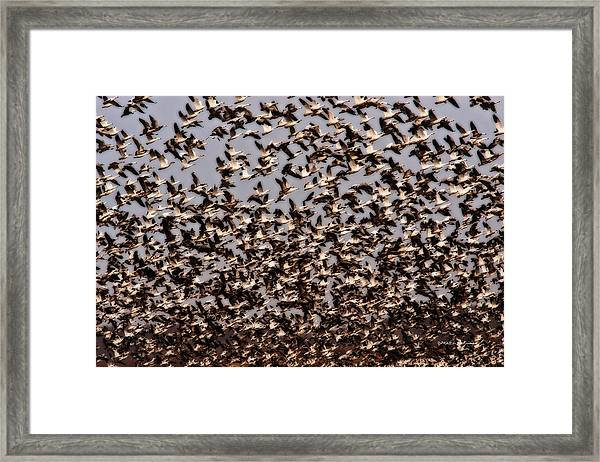 Duck Wall Framed Print