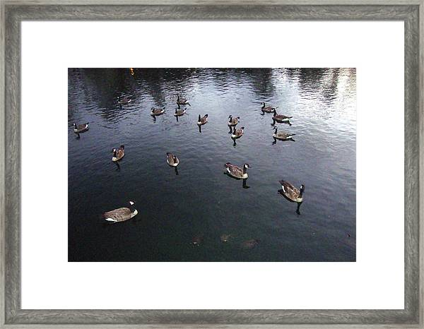 Ducks At Sunset Framed Print by Leigh Odom