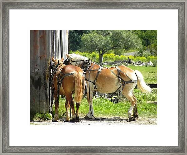 Duke And Daisy Framed Print