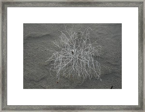 Dune Flower Framed Print