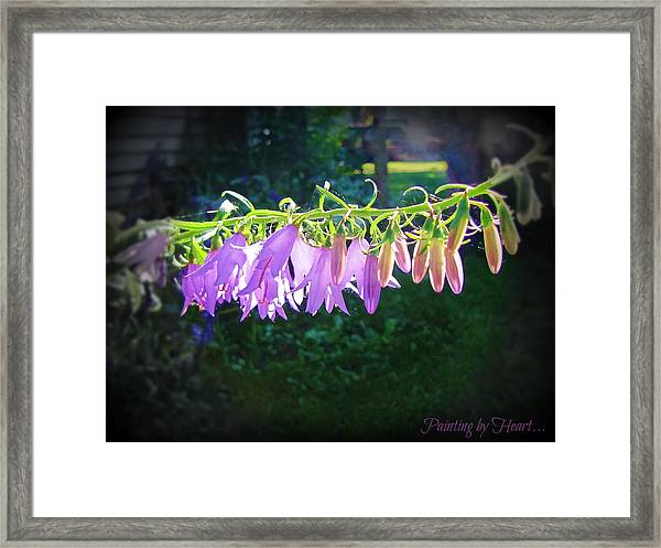 Early Morning Touch Framed Print