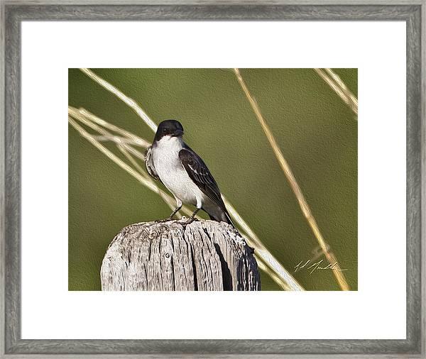 Eastern Kingbird Framed Print