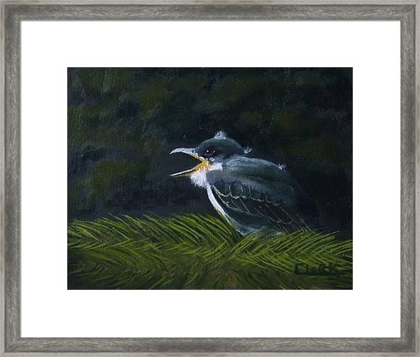 Eastern Kingbird Fledgling Framed Print