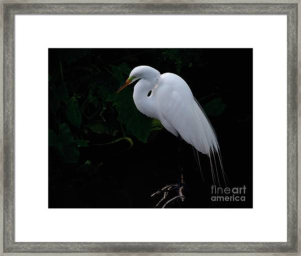 Egret On A Branch Framed Print