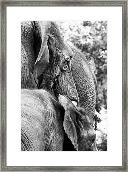 Elephant Ears Framed Print