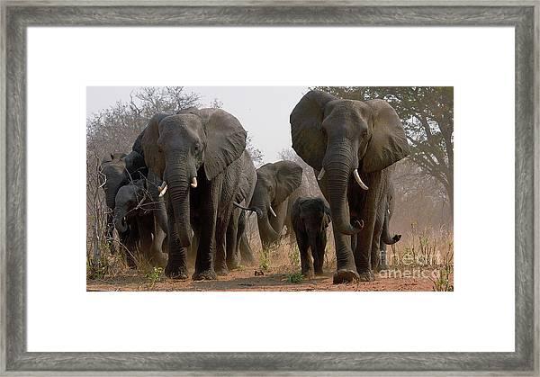 Elephant Family Framed Print