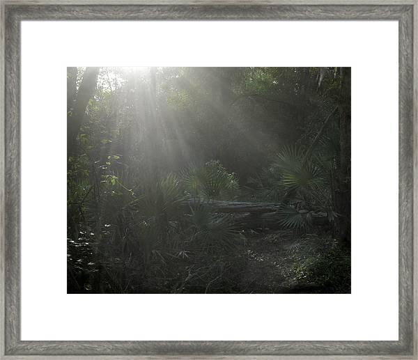 Enchanted Glen Framed Print