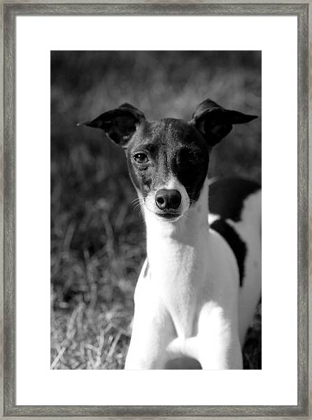 Ethan In Black And White Framed Print