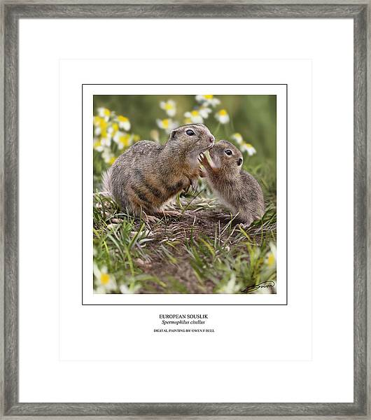 European Souslik With Young Framed Print by Owen Bell