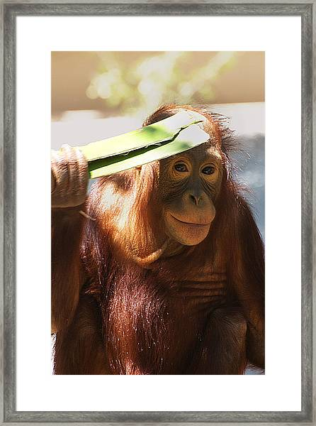 Eyeshade Framed Print