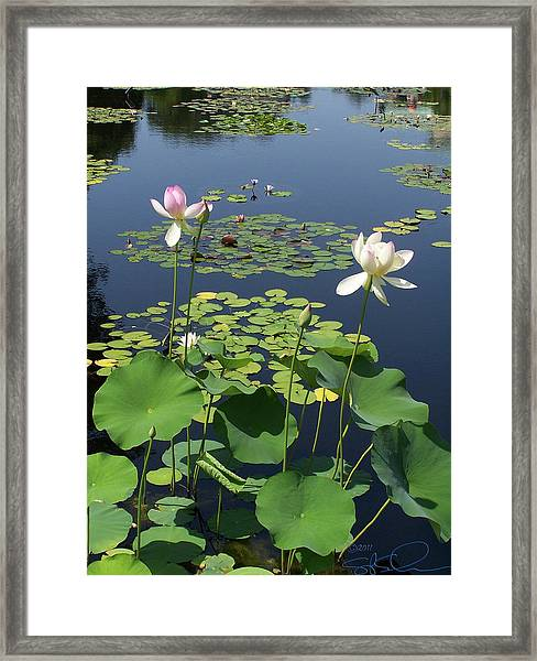 Fading Glory Framed Print