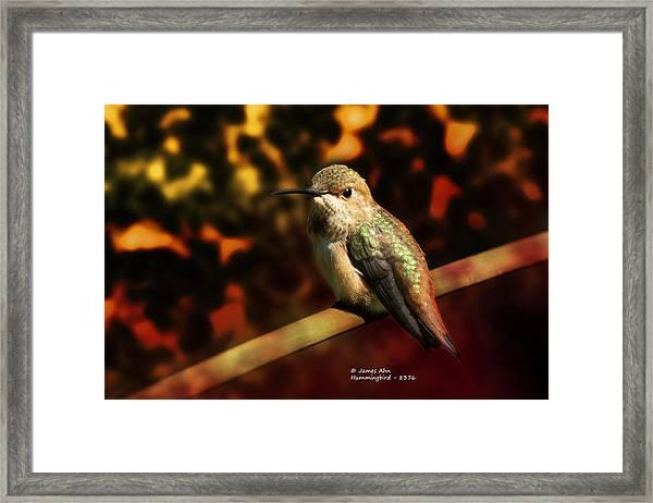 Fall Colors - Allens Hummingbird Framed Print