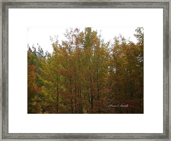Fall Colors Colection - Michigan Framed Print