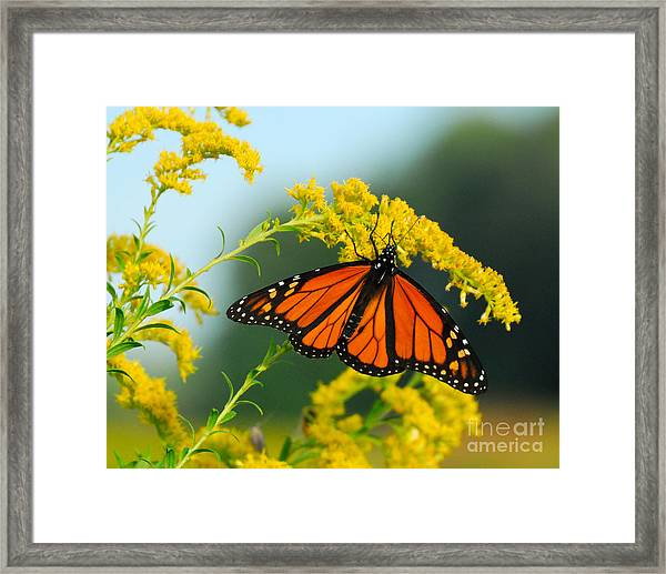 Fall Colour Framed Print
