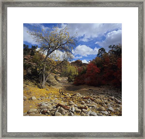 Fall In Zion High Country Framed Print