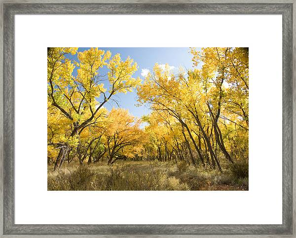 Fall Leaves In New Mexico Framed Print