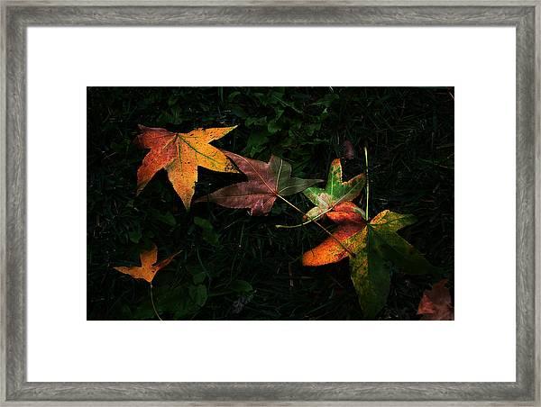 Fall Leaves On Grass Framed Print