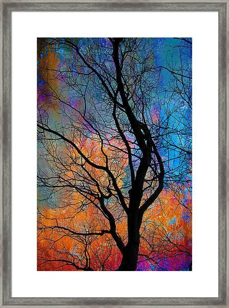 Fall Magic Framed Print