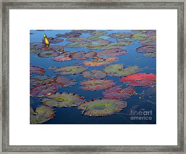 Fall On A Lake Framed Print
