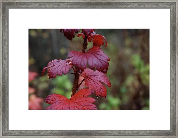 Fall Reds Framed Print
