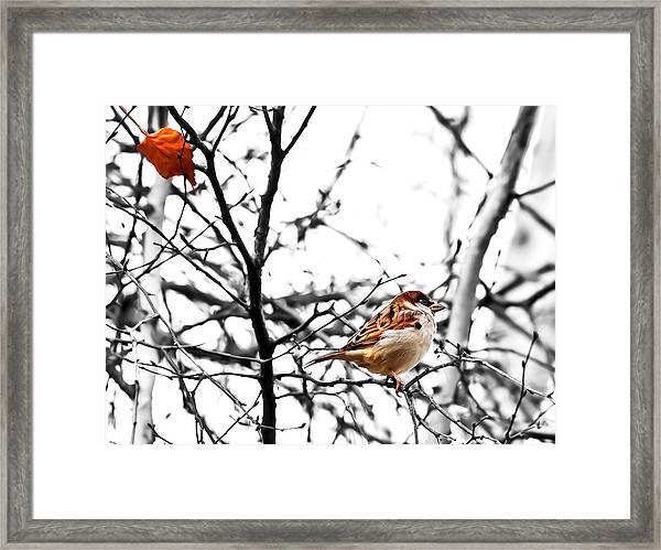 Fall Sparrow Framed Print