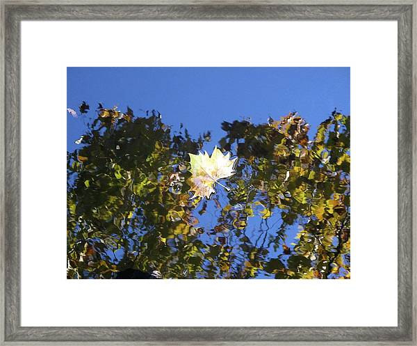 Framed Print featuring the photograph Fallen Leaf by Ralph Jones