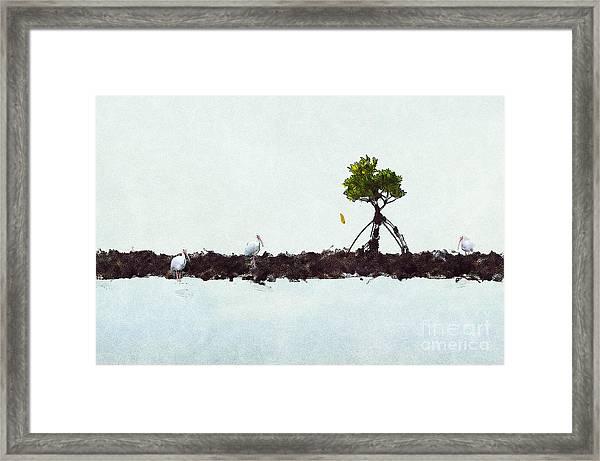 Falling Mangrove Leaf Framed Print