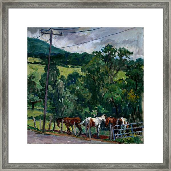 Farm Horses Berkshires Framed Print