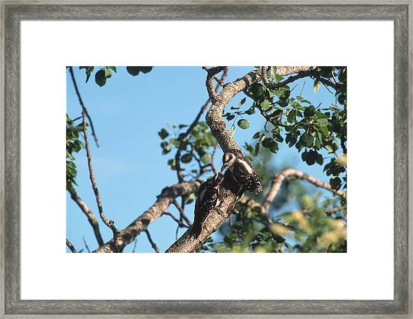 Feeding Its Young Framed Print