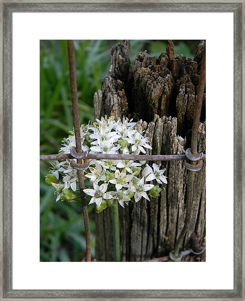 Fence And Flower Framed Print by Warren Thompson