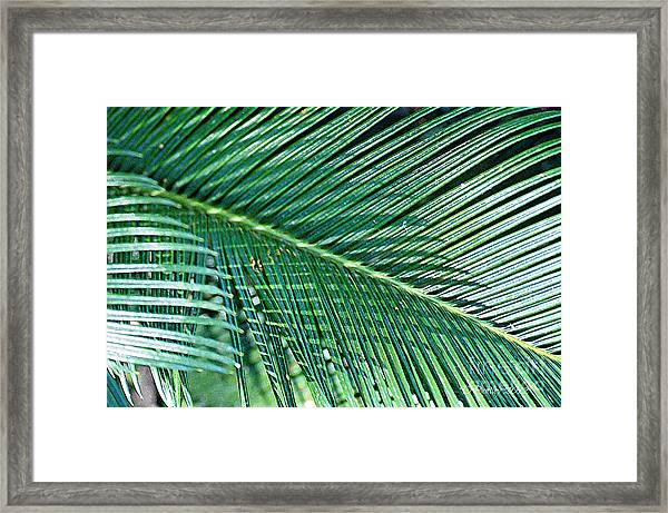 Ferns 56 Framed Print