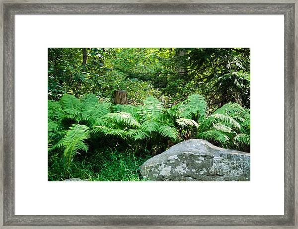 Ferns  At The Edge Of The Woods Framed Print by Anne Boyes