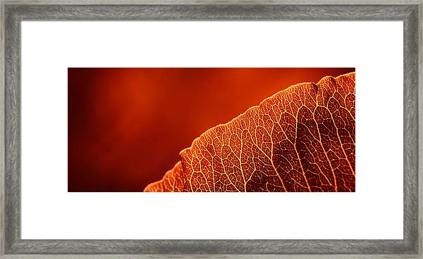 Fifty Shades Of Red Framed Print