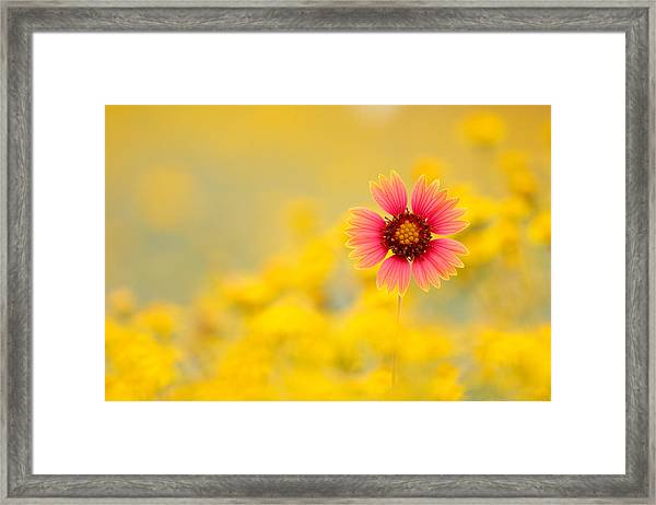 Firewheel Isolation Framed Print