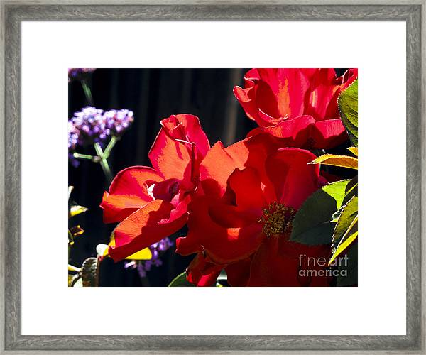 First Blooms Framed Print