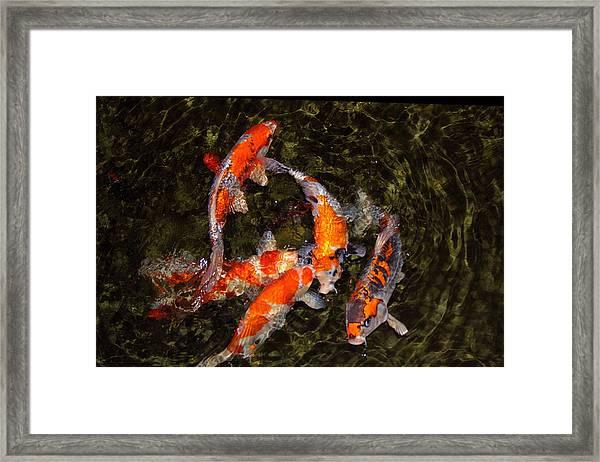 Fish Game Framed Print