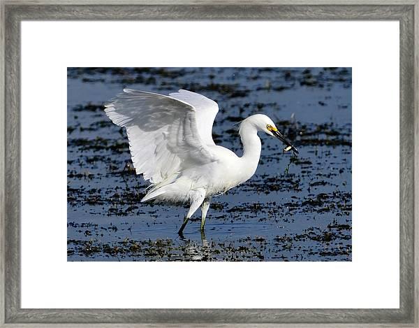 Fishing Dance Framed Print