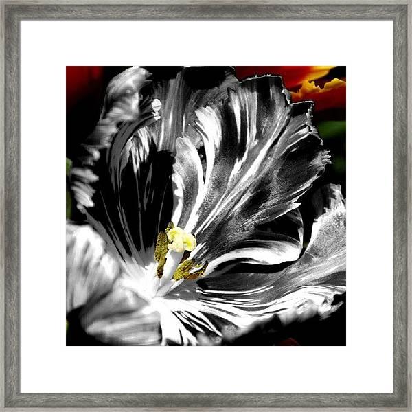 Flaming Flower 1 Framed Print