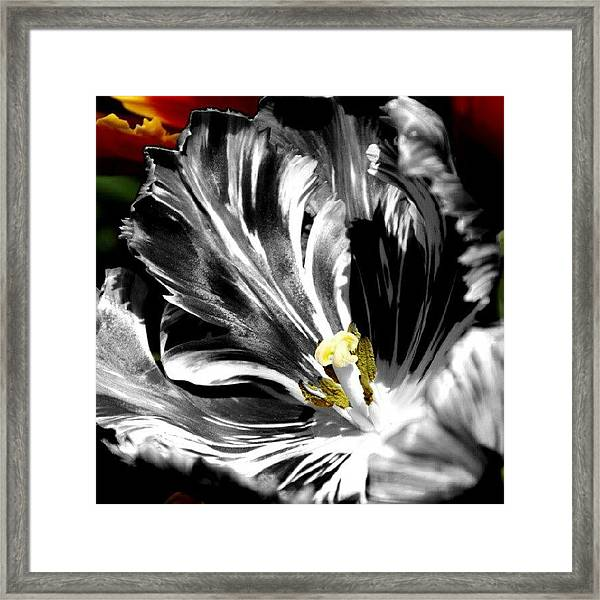 Flaming Flower 2 Framed Print