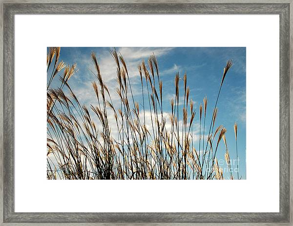 Flare To The Sky Framed Print