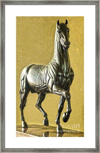Florence Italy - Anatomical Horse Statue - Medici Palace Framed Print