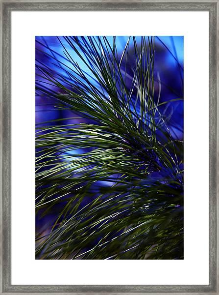 Florida Grass Framed Print