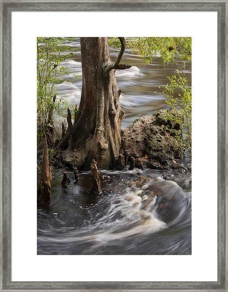 Florida Rapids Framed Print