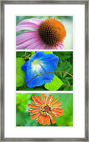 Flower Collage Part Two Framed Print