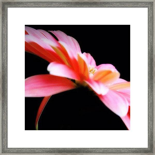 #flower #flowers #daisy #pretty #beauty Framed Print