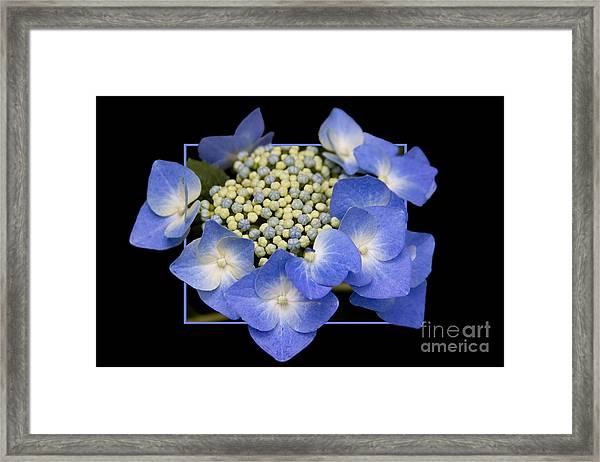 Flower In Frame -11 Framed Print