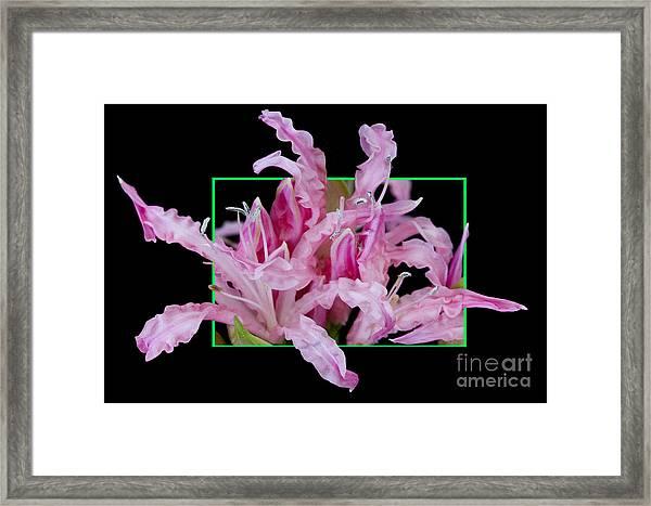 Flower In Frame -13 Framed Print